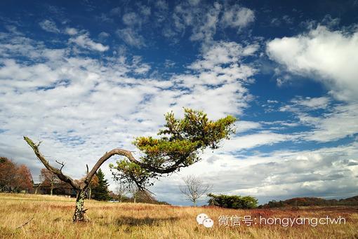 【心靈之燈】砍樹哲理:很多人出發太久了, 8.5cm,各項優質生活好商品,竟忘了為什麼上路 ! – 拓播17