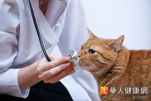 貓咪吐毛流口水 小心是中毒了   華人健康網