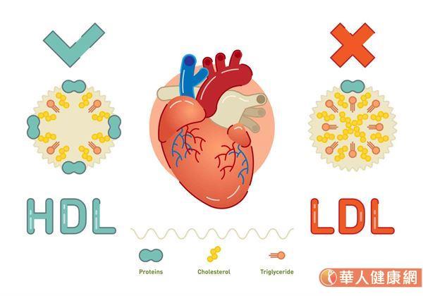 別再誤會膽固醇!膽固醇≠壞東西,竟是荷爾蒙,維生素D原料   華人健康網
