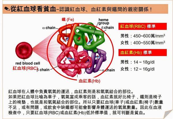 貧血就是缺鐵?亂補「鐵」定出問題 | 內科 | 健康新知 | 華人健康網