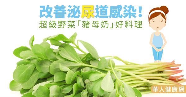 改善泌尿道感染!超級野菜「豬母奶」好料理-華人健康網-良醫健康網