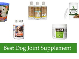 Best Dog Joint Supplement Review