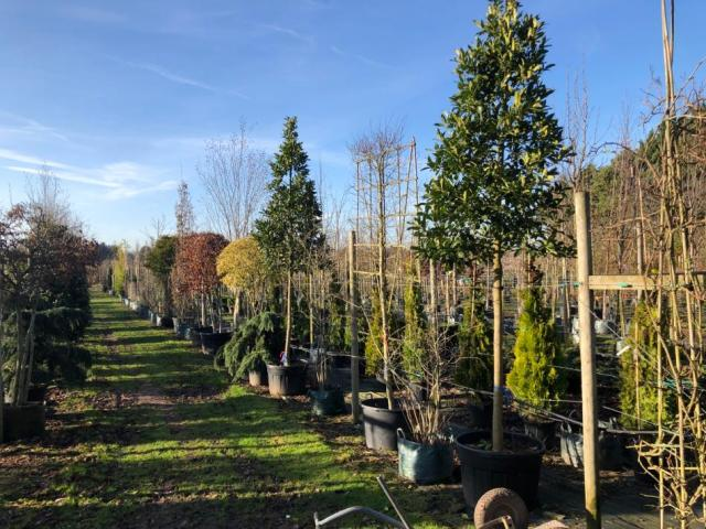 Tree and Hedge Planting