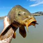 carp fishing