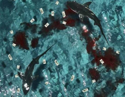 Download Shy Glizzy & Glizzy Gang – Don't Feed The Sharks zip download