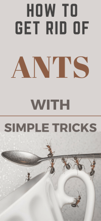 How to Get Rid of Ants In The Kitchen With Simple Tricks ...