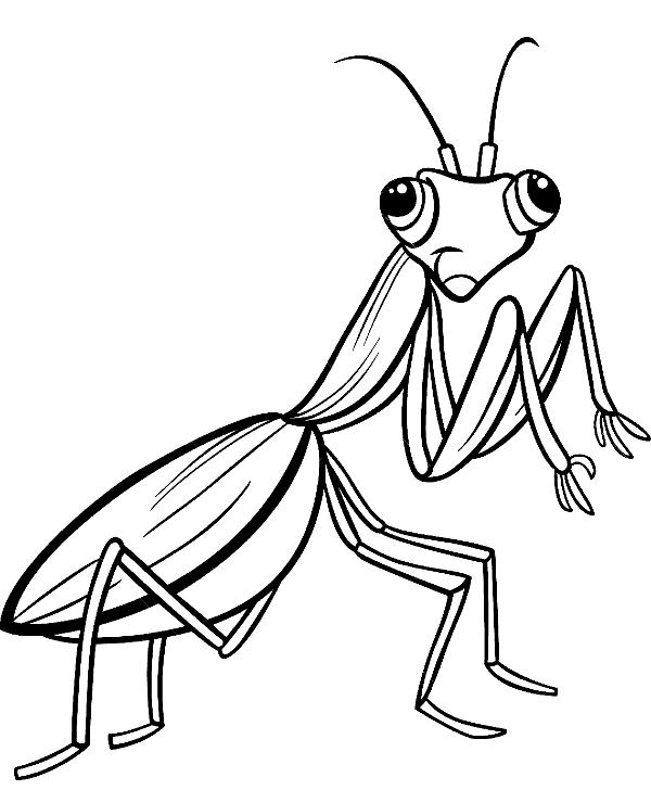 praying mantis coloring page sketch