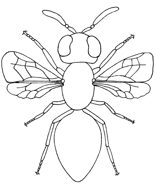 High-quality Flying insect housefly coloring book to print