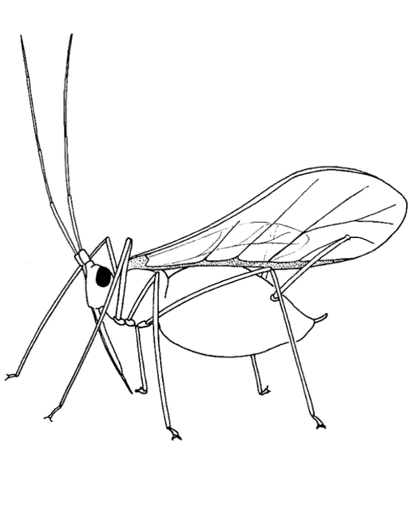 High-quality Locust printable coloring page to print for free