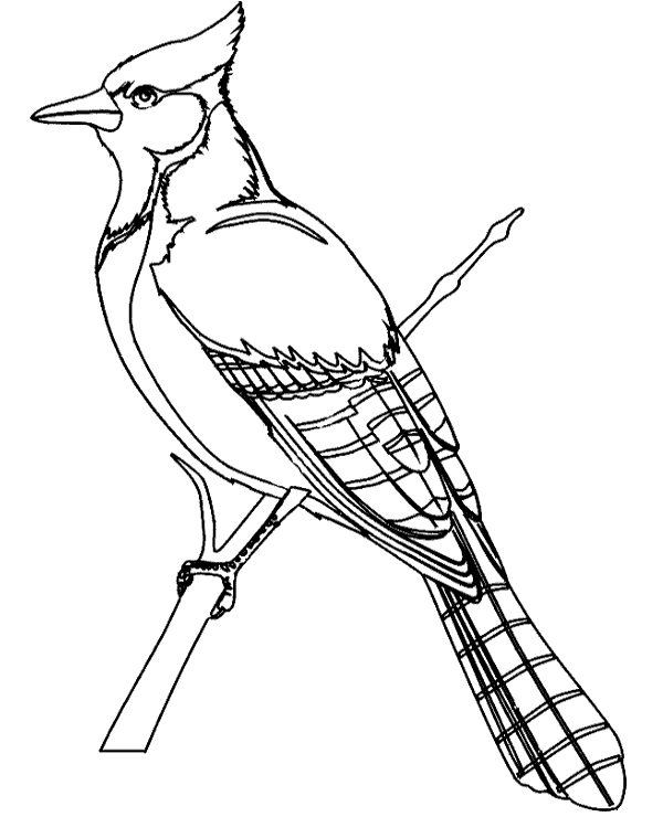 Birds coloring books 19 to print or download for free