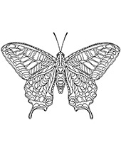 Butterfly for coloring