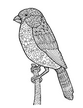 Coloring page with bird
