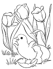 Little chick and tulips color for free