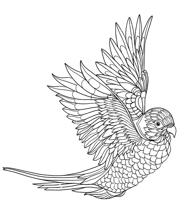 Printable colouring pages with birds, parrot to color