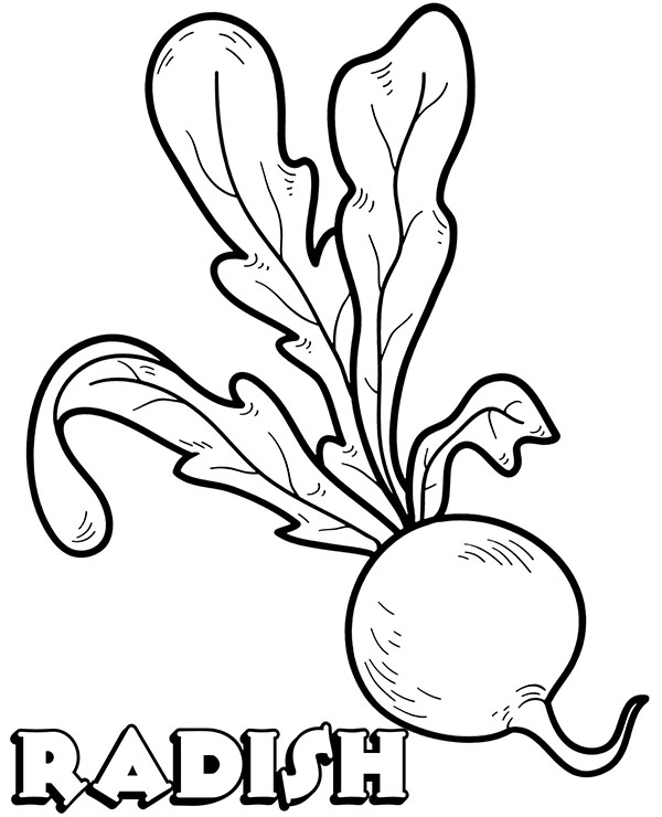 Radish realistic picture easy coloring page sheet for kids