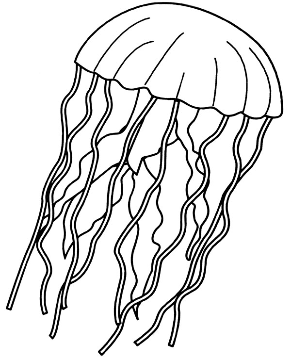 Jelly Fish Coloring Page : jelly, coloring, Printable, Jellyfish, Coloring