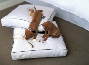 wesde-27107-Heavenly dog bed