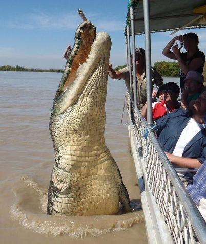 Morský krokodíl Najväčší predátor na svete
