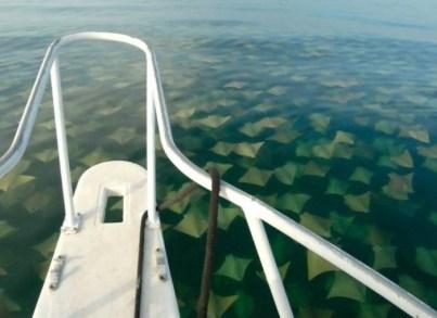 10) Manty všade naokolo nebezpečenstvo v oceáne