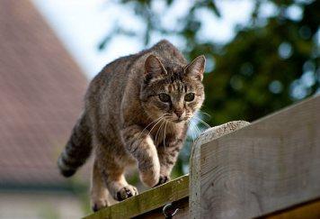 6 Sú to vášniví lovci Prečo mať mačku