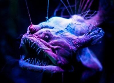 7) Hlbokomorské živočíchy nebezpečenstvo v oceáne