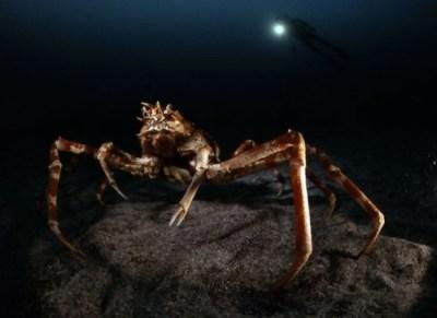 8) Obrovské kraby nebezpečenstvo v oceáne