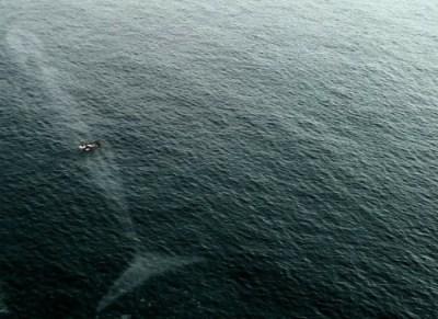 9) Veľkosť veľryby nebezpečenstvo v oceáne