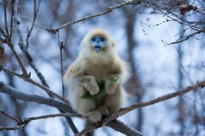 6. Opica s nosom