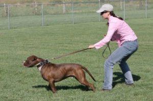 8. Ťahanie vodítka Zle správanie psa