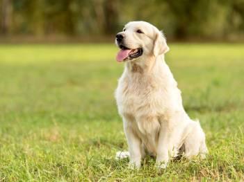 Čo robiť aby pes žil dlhšie