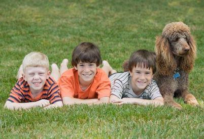 3.Pudel Pes k deťom