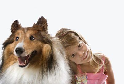 7.Kólia dlhosrstá Pes k deťom