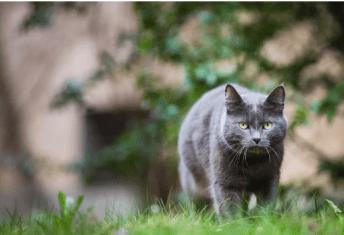 Podnikajte bezpečne prechádzky Chovať mačku vonku alebo na byte ?