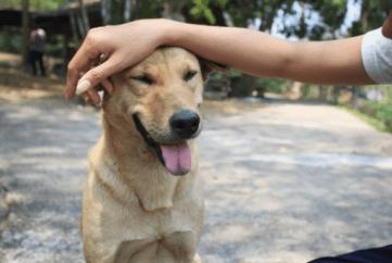 Hladiť psa po tvári 11 vecí, ktoré ľudia robia, ale psy nenávidia