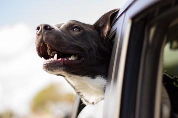 cestovanie so psami Druhý pes