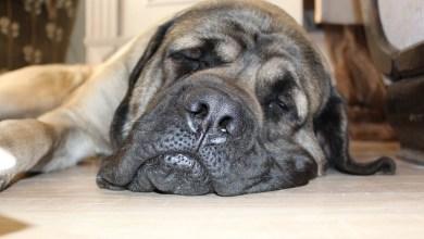 10 dovodov preco pes chrape