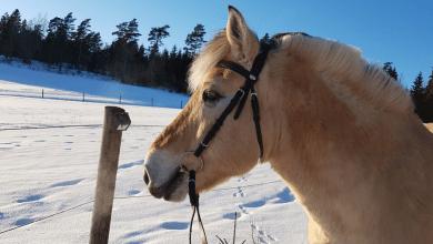 Kompletná starostivosť o kone počas zimných mesiacov