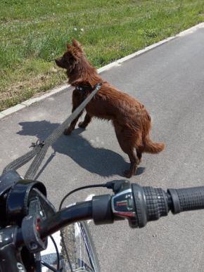 pes na bycikli Psy lepšie ako mačky
