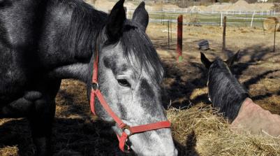 viac koni kone