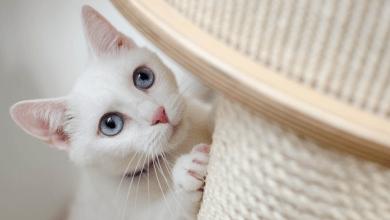 mačky proti stresu