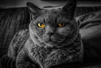 spokojnosť mačky v interieri