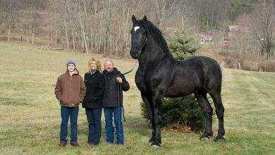 7 najväčších plemien koni