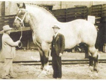Najväčšie kone v histórii