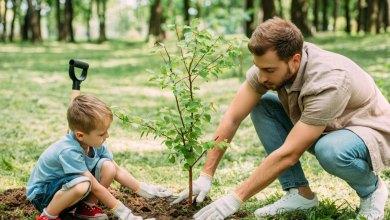 top 11 dovodov prečo zasadiť strom
