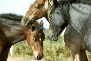 Kone spia v stoji faktoch o koňoch