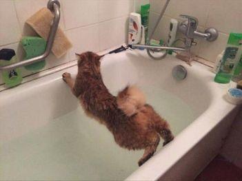 mačka sa nerada kupe