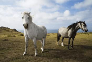 Väčšina bielych koní je v skutočnosti sivá faktoch o koňoch
