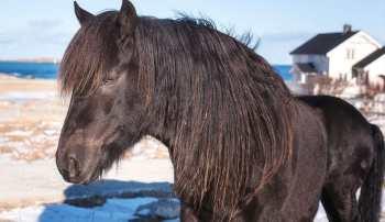 Dole Gudbrandsdal najťažších plemien koní na svete