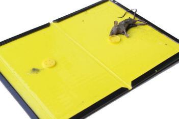 lep na myši zbaviť myší v dome