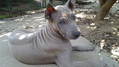 top 10 naajvzacnejšich plemien psov